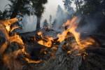Incendi e tragedie naturali: va cambiata l'organizzazione dei soccorsi